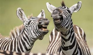 15 Divertidas Imágenes De Animales En La Naturaleza