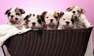 ¡Los Cachorros Arrugados Son Los Mejores!
