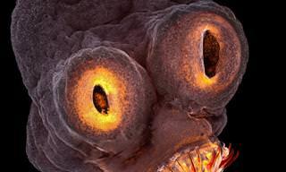 20 Peculiares Fotos Microscópicas Que Debes Ver