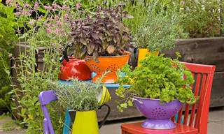 ¡Ideas Creativas Para Tener Plantas En Casa!
