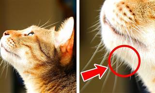 40 Cosas Que No Sabías Sobre Los Gatos