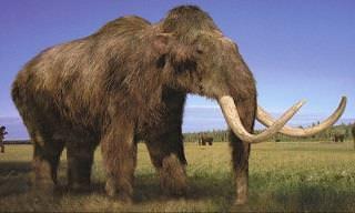 12 Animales Que Los Científicos Quieren Recuperar De La Extinción