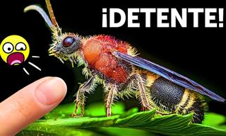 Atención Si Ves a Esta Hormiga Impostora