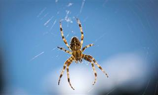 Cómo Hacer Que Tu Casa Sea Un Lugar Libre De Arañas