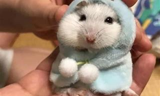 Clima Del Suéter: Fotos Adorables De Mascotas Con Ropa Invernal
