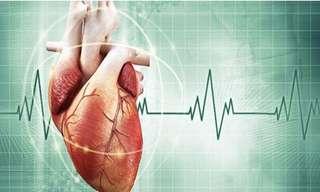 25 Datos Sobre El Corazón Humano