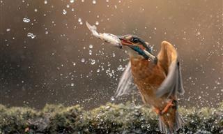 Fotógrafo Realiza Tomas De Acción Únicas De Adorables Animales
