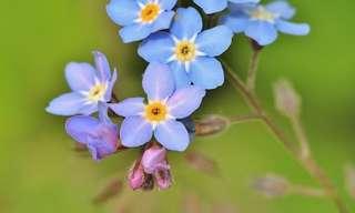 10 Bellas Flores Que Crecen En La Sombra
