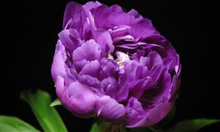 Tómate Un Segundo Para Admirar Estas Hermosas Flores