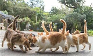 Fotógrafo Captura La Vida De Los Gatos Callejeros De Tokio