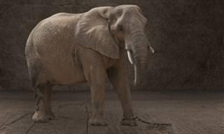El Cuento Del Elefante Encadenado