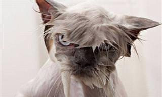A Algunas Mascotas No Les Sienta Muy Bien La Hora Del Baño