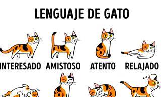 5 Tips Para Ser El Mejor Amigo De Tu Gato