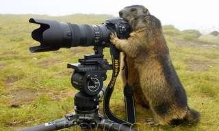 Divertidos Animales Tomando Fotos