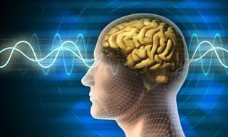 7 Hechos Sobre La Relación Entre El Cerebro y El Cuerpo