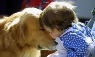 Los Perros Aman a Sus Dueños…