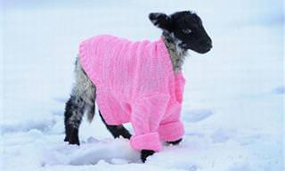 Estos Animales Ya Están Preparados Para El Invierno