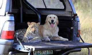 La Amistad Entre Animales En Primer Plano