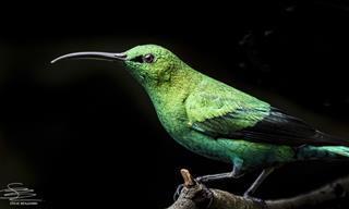 10 Impresionantes Imágenes De Las Aves Solares Más Bellas De Sudáfrica