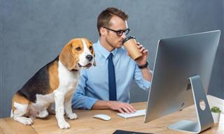 Los Efectos Psicológicos De La Cuarentena En Las Mascotas