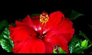 El Momento En El Que Las Flores Se Abren Al Mundo…