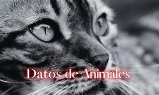 Trivia Del Reino Animal