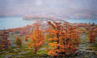 Encantadores Colores Otoñales En La Patagonia En Sudamérica