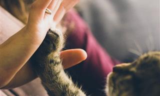 Estudio: La Sorprendente Relación Entre Gatos y El Hombre