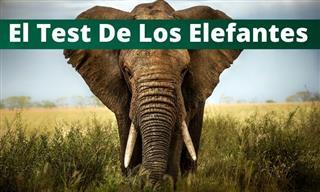 ¿Qué Tanto Sabes Sobre Los Elefantes?