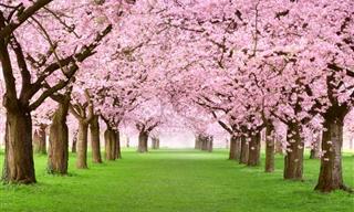 Nuestros 7 Mejores Posts Sobre La Primavera