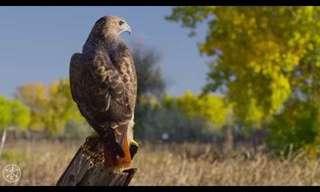 Increíble: Aves De Presa En Colorado