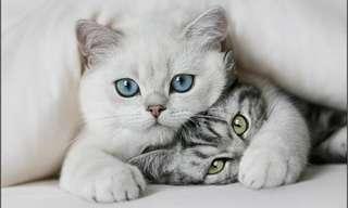 ¡Feliz Día De Gatos!