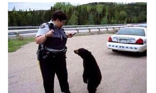 Divertidas Fotos Para Que Veas Como Es Vivir En Canadá