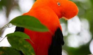 Las 15 Aves Más Fascinantes Del Mundo