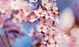 16 Hermosas Flores Que Crecen En Árboles Frutales