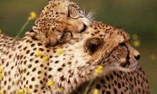 Nada Mejor Que Abrazo Con Amor…