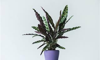 10 Plantas Que Pueden Matarte