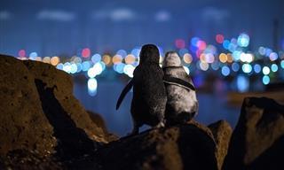 Espectaculares Fotos Que Son Un Tributo a Los Océanos Del Mundo