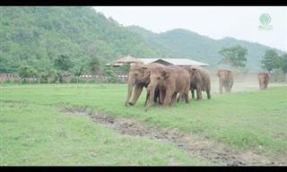Adorable: Hermosa Bienvenida De Un Nuevo Elefante En La Ciudad