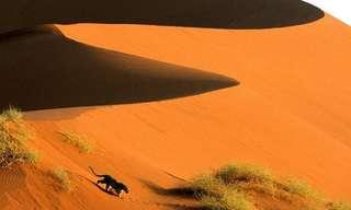 Descubre La Belleza De África