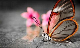 La Bella Mariposa De Cristal…