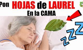 Hojas De Laurel En La Cama Para Aliviar El Insomnio
