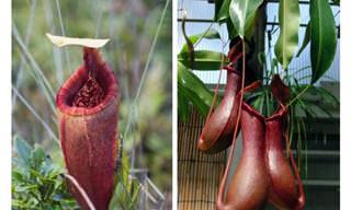8 Planta Exóticas Que No Creerías Que Existen