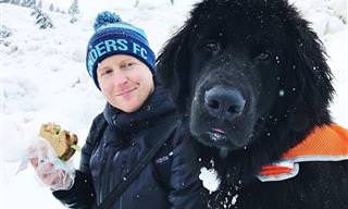 Adorables Perros De Terranova