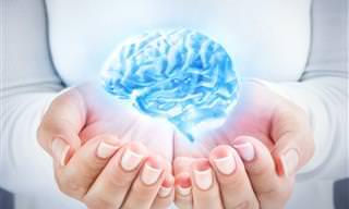 ¡Datos Fascinantes Sobre El Cerebro Humano!