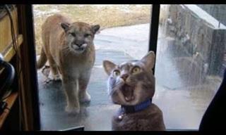 Animales Divertidos Que Nos Hacen Reír y Sacar Una Sonrisa