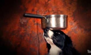 Nunca Creí Que Un Perro Fuera Capaz De Hacer Esto