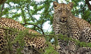 Descubre La Fauna y Naturaleza Africana En Su Máxima Expresión
