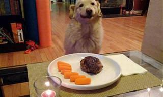 Muy Lindo: 15 Sonrientes Perros