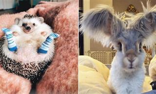 La Ternura De Estos 15 Animales Logrará Alegrar Tu Día